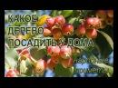 Какое дерево посадить у дома чтобы в семье был достаток благополучие и любовь Народные приметы