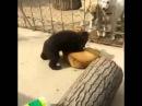 Медведь против собакимедведь борец