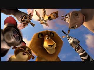 "Ночь кино : ""Мадагаскар 2 + 3 "" , "" Пингвины из Мадагаскара """