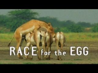 3. наперегонки к яйцеклетке / race for the egg (брачные игры в мире животных / battle of the sexes: in the animal world) 1999