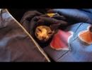 Эльдар Богунов снимает спящую кошку в одьяле!