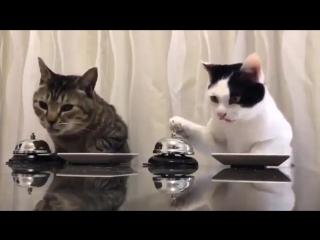 Коты и хорошие манеры