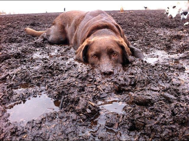 Když pes miluje hrátky v bahně