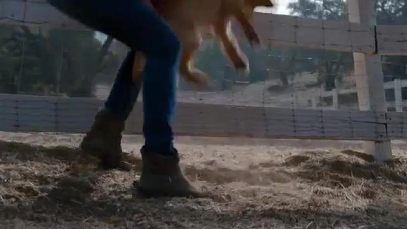 Милая реклама дружбы коня и щенка