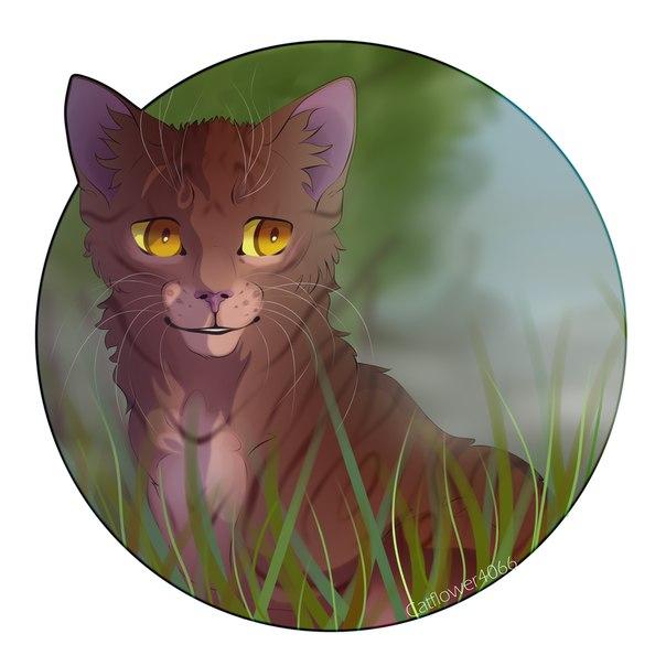 актуальную коты воители картинки всем привет предметы декора