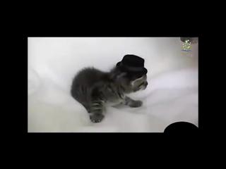 Нарезка приколов про котов. Самые забавные моменты из жизни животных.