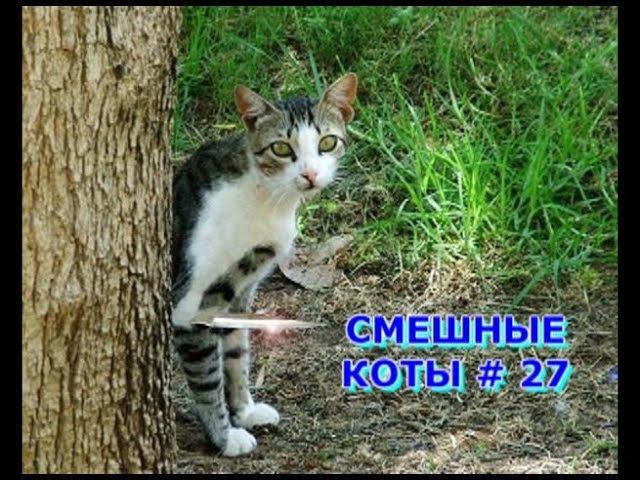 Приколы с кошками и котами 27 Подборка смешных и интересных видео с котиками и кошечками 2017
