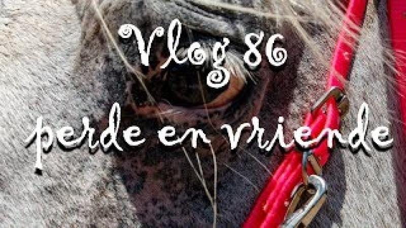 Vlog 86 perde en vriende The Daily Vlogger in Afrikaans