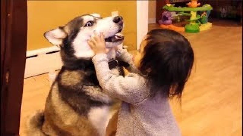 Adorable Babies Examines Dog s Teeth Top Dog Video Compilation