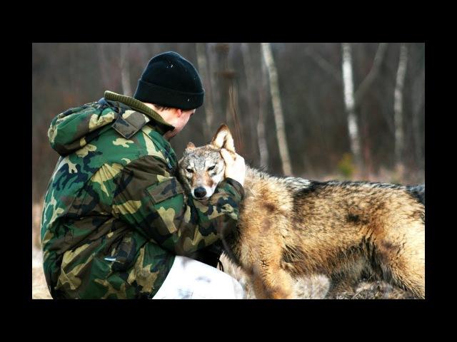 Волчица по имени Дайя Очень трогательный фильм Film Studio Aves