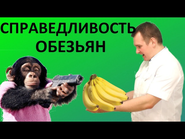 Понимают ли обезьяны ЧТО ТАКОЕ СПРАВЕДЛИВОСТЬ Эксперимент Франц де Вааль