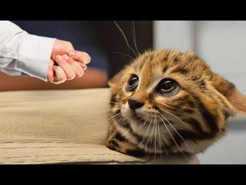 НВЕРОЯТНО СМЕШНЫЕ ПРИКОЛЫ до слез Смешные коты и Смешные собаки 2018 Трахни Нормальность