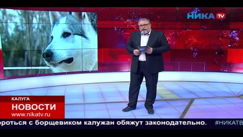 Конкурс красоты охотничьих собак вРождественно собрал участников изМосквы Тулы иКалуги mp4