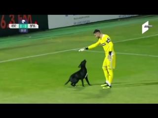 Пёс выбежал на поле в Грузии