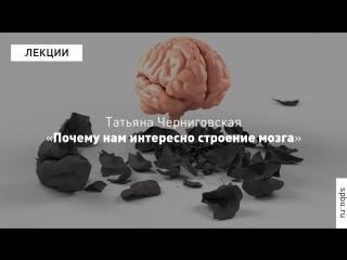 Science slam: татьяна черниговская о том, почему нам интересно строение мозга