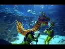 Chinese New Year underwater dragon dance at S.E.A. Aquarium