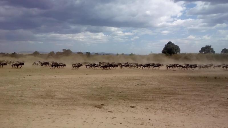 Великая миграция в Кении