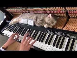 Котя спит на пианино пока на нем играют
