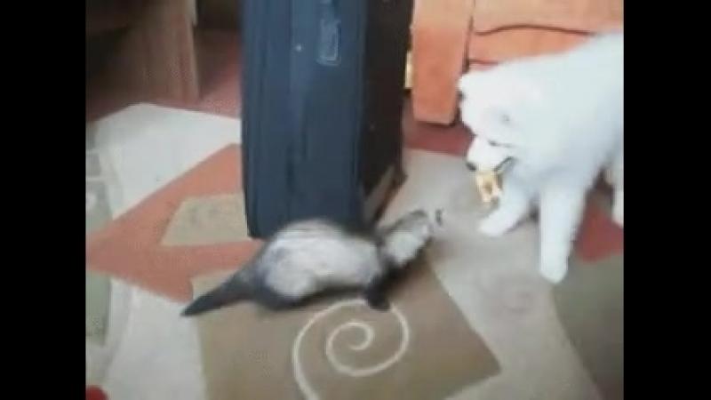 Очень смешные гифки с животными