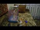 Попугай Докси и кот Кузя - видео №2 ( Второе свидание закончилось неудачно) !