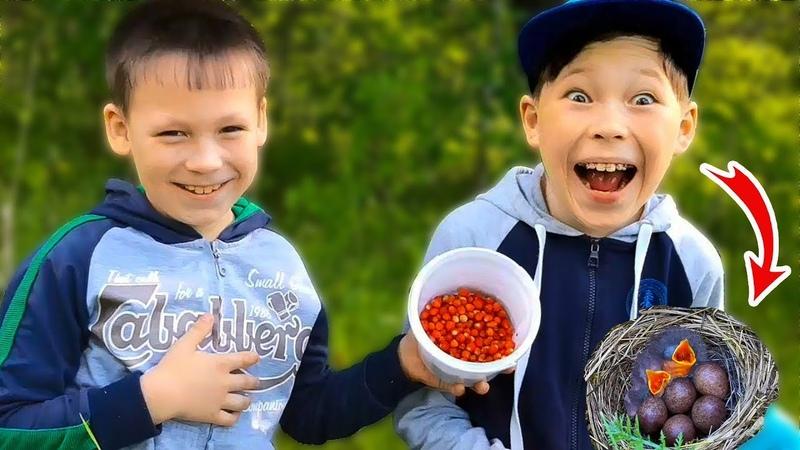Приключения Вити и Темы Пошли за ягодами нашли яйца и птенцов Детские приключения Vitar Show