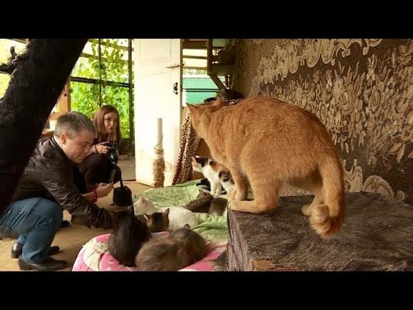 В Костроме стартовала акция в поддержку брошенных животных Лучший друг