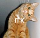 Фотоальбом Павла Владимирова