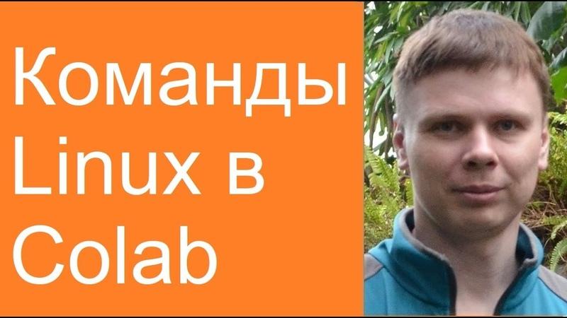 Команды Linux в Colab | Нейросети в Google Colab