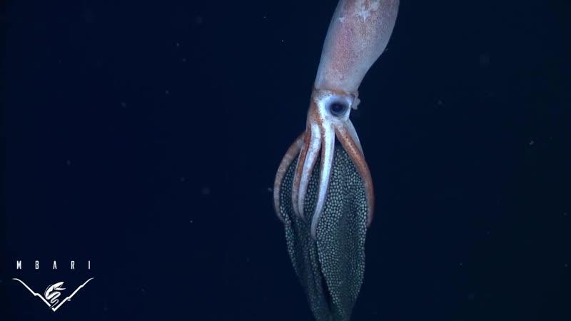 Заботливые кальмары озвучка Enot Sova