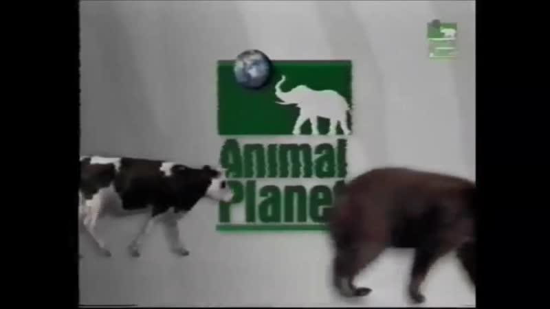 Заставка канала Animal Planet 1998-2000 г. {4}