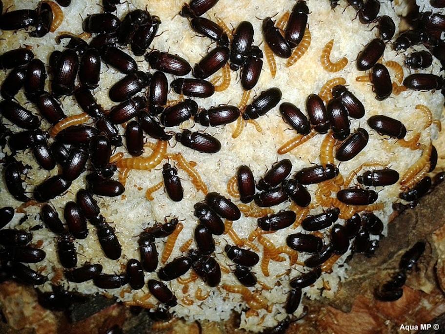 глушат мошенники жуки от рака фото женщины обществе ограничивалась