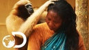 Adorable Ape Shares A Fascinating Relationship With Humans | Wild India