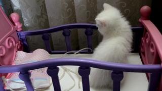Озвучка!Кошка Мурка родила котёнка.Малютка котёнок! Как назвать котёнка?