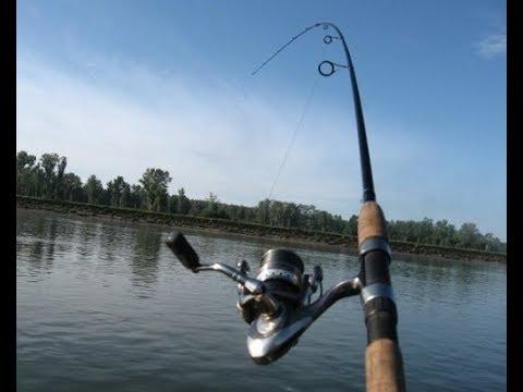 3 утренних рыбалки подряд Саратов