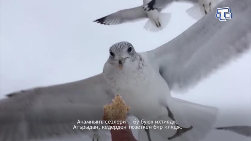 Шиирлер Эльмара Мустафа Анамнынъ козьлери Выпуск от 08 08 2019