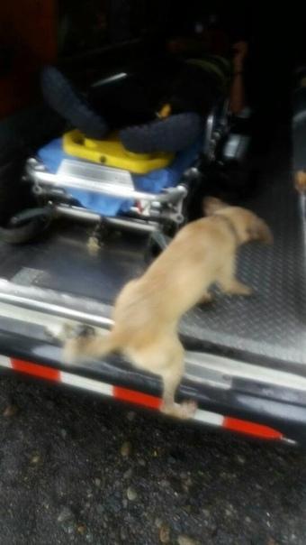 В Коста-Рике собака выпрашивала помощь у прохожих, потому что у ее хозяина случился сердечный приступ Поскольку мужчина был беден и плохо одет, прохожие думали, что это пьяница, и спокойно