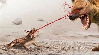 Безумные способы которыми животные себя защищают