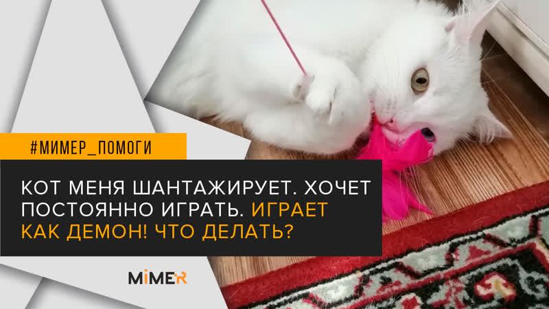 Mimer.ru   Ответ ветеринара: Кот меня шантажирует, постоянно хочет играть, играет как демон. Что делать?