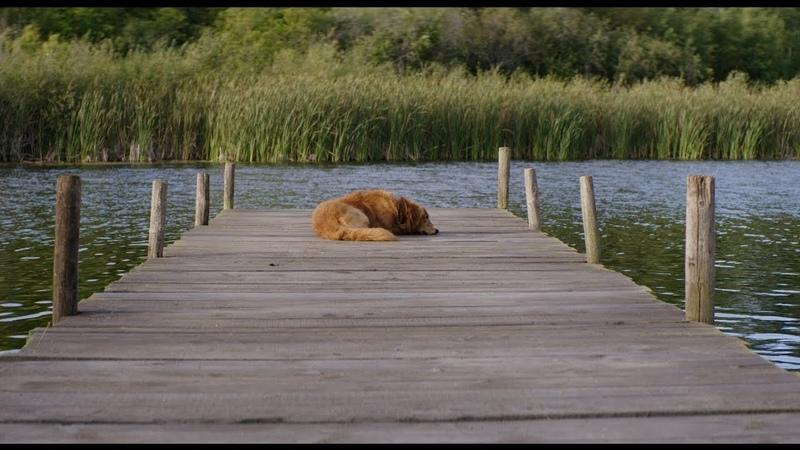 A Dog's Purpose Ludovico Einaudi Experience Bailey's dog