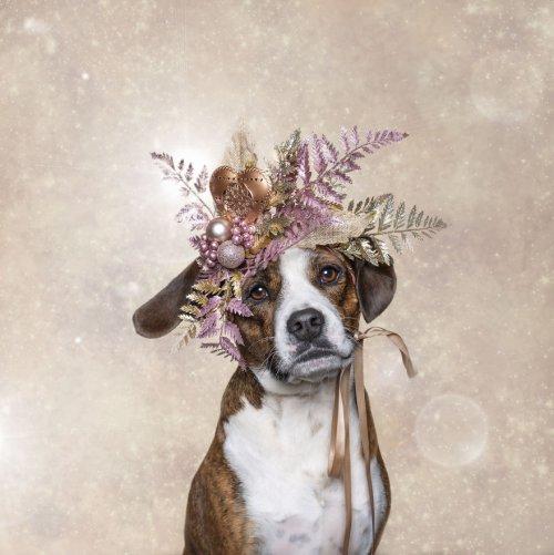 Очаровательные кошки и собаки в рождественской фотосессии Белинда Ричардс (Belinda Richards) фотограф домашних животных из Мельбурна, которой пришла идея организовать праздничную рождественскую