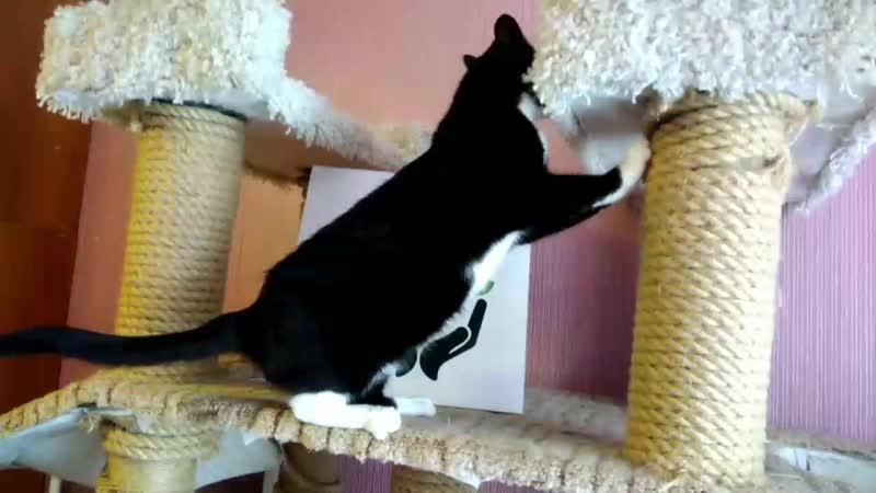 Кошка Таша в добрые ручки