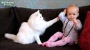 Nette Katzen und Babys Kuscheln - Babys Lieben Katze Kompilazion