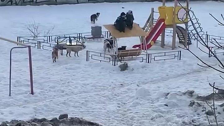 Дети спаслись от бродячих псов на крыше качелей