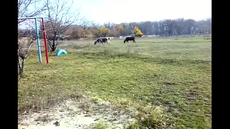 Никитовка футбольное поле футболистки