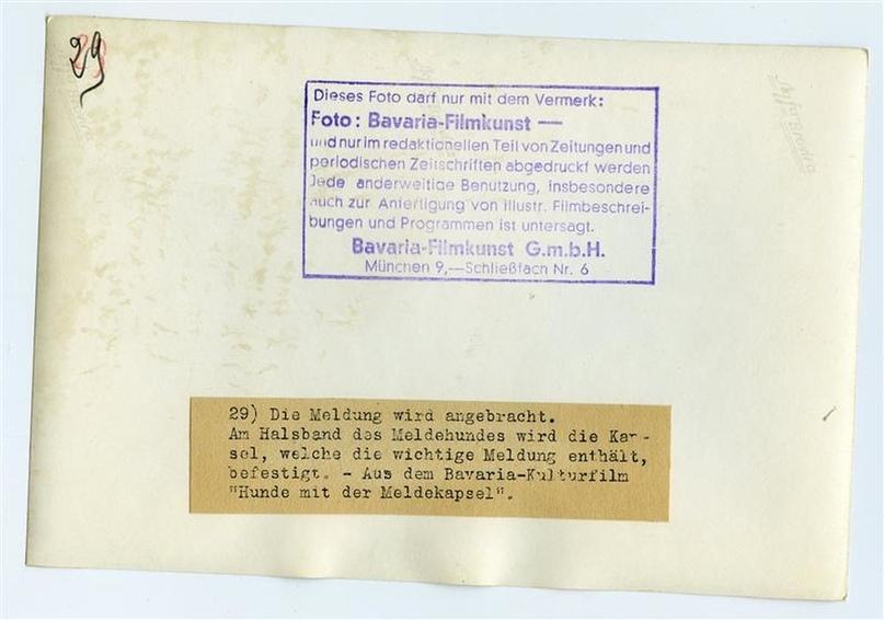 Рядовой вермахта Тассо, изображение №7