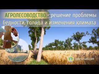 Агролесоводство - решение проблемы бедности, голода и изменения климата.