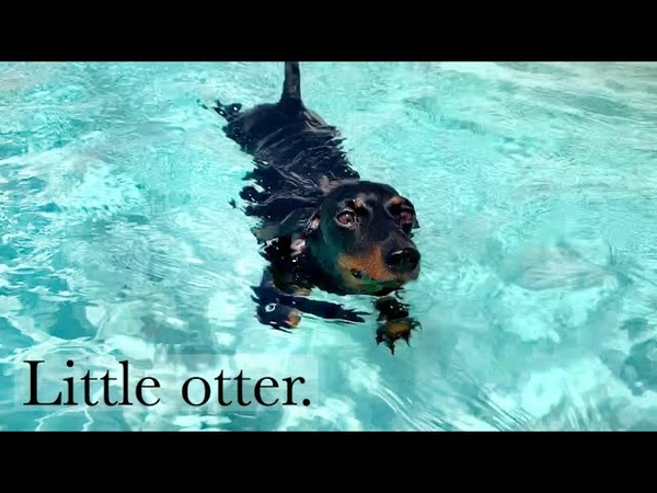 Loulou's Travel Diary  5 little otter.