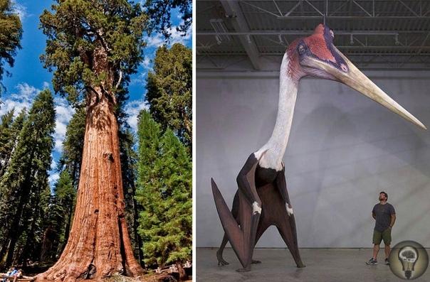Больше, чем кажется. Ч.-2 1. Генерал Шерман (самое большое дерево в мире) и птерозавр 2. Взрослый вомбат 3. США и Луна 4. Сатурн вместо Луны 5. Кожистая черепаха 6. Давид Микеланджело 7.