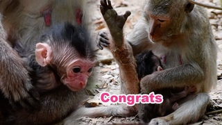 Congrats To Mama Sandy Just Gave Birth To Newborn Baby - Adorable Wildlife 2020