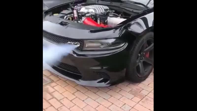 Дыхание адской кошки